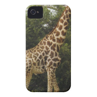 Awesome Giraffe iPhone 4 Case-Mate Cases