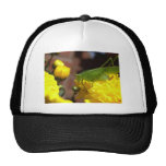 Awesome Grasshopper Photography Design Mesh Hat