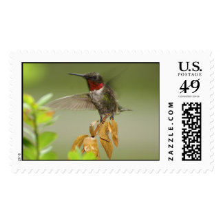 Awesome Hummingbird Postage Stamp