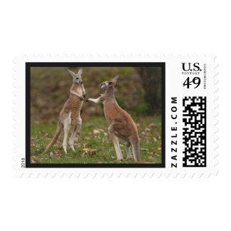 Awesome Kangaroo Postage Stamp