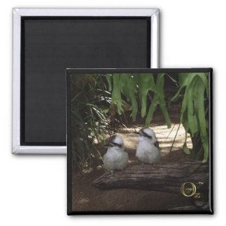 Awesome Kookaburras 2 Inch Square Magnet