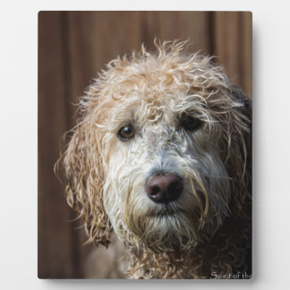 Awesome Labradoodle Pup gifts Photo Plaques