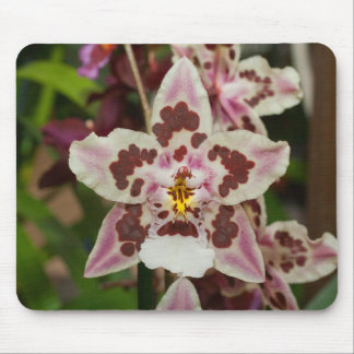 Awesome Multicolored Phalaenopsis Orchid Mouse Pad