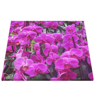 awesome orchids pink canvas print
