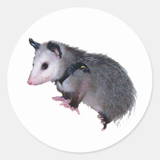 Awesome Possum Opossum Classic Round Sticker