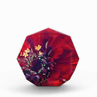 Awesome Red Flower Award