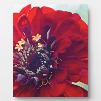 Awesome Red Flower Plaque