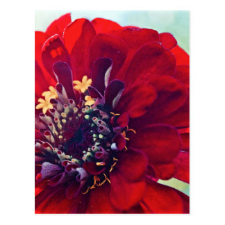 Awesome Red Flower Postcard