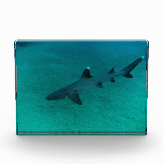 Awesome Shark in the Deep Award