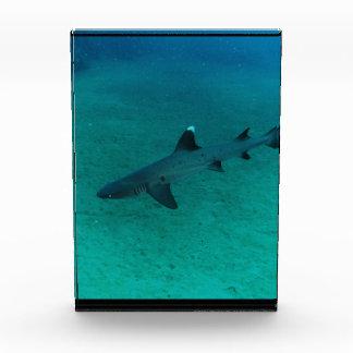 Awesome Shark in the Deep Acrylic Award