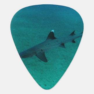 Awesome Shark in the Deep Pick