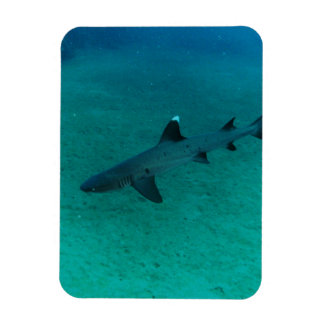 Awesome Shark in the Deep Rectangular Magnets