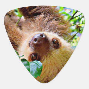 awesome Sloth Guitar Pick