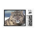 Awesome Snow Leopard Postage Stamp