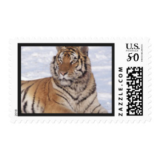 Awesome Tiger Postage Stamp