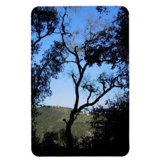 Awesome Trees on York Mountain Road, Templeton Rectangular Photo Magnet