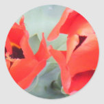 awesome tulips.JPG Round Stickers