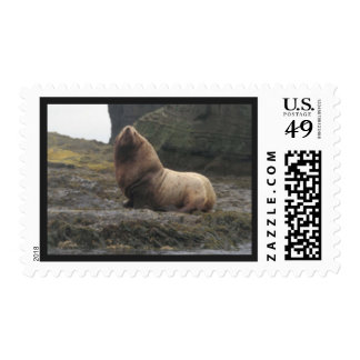 Awesome Walrus Postage Stamp