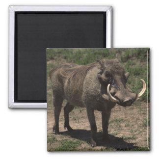 Awesome Warthog Magnet