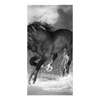 Awesome wild horse photo card