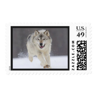 Awesome Wolf Postage Stamp
