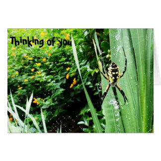 Awesome Yellow and Black Garden Spider Photography Card