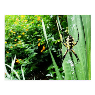 Awesome Yellow and Black Garden Spider Photography Postcard