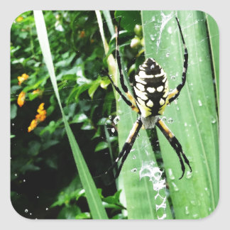 Awesome Yellow and Black Garden Spider Photography Square Sticker