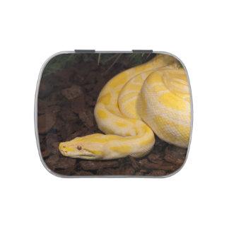 Awesome Yellow Burmese Python Candy Tins