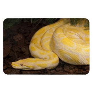 Awesome Yellow Burmese Python Magnet