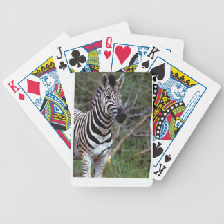 Awesome zebra on deck of cards