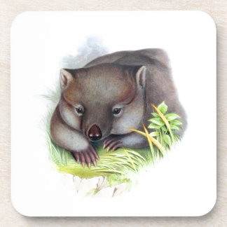 Awesomely cute Australian animal wombat vintage Drink Coaster