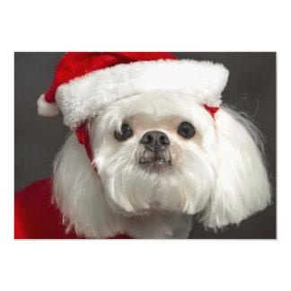 Awkward Santa dog Card