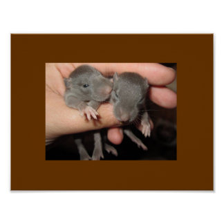 AWWW BABIES! RAT POSTER