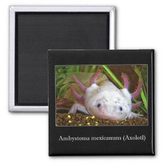 Axolotl 2 Inch Square Magnet