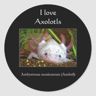 Axolotl Classic Round Sticker