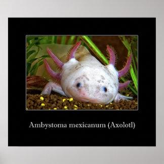 Axolotl Posters