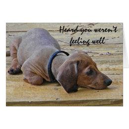 AY- Funny Dachsund Puppy Dog Get Well Card