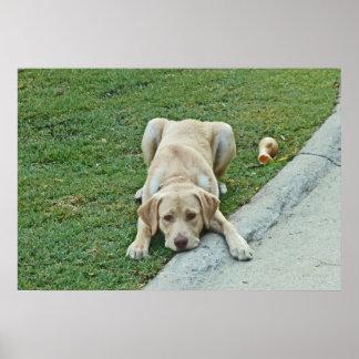 AY- Yellow Labrador Puppy Pouting Poster