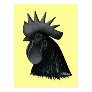 Ayam Cemani Rooster Head Postcard