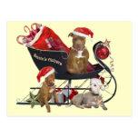 Ayudantes de Pitbill Terrier Santa Postal