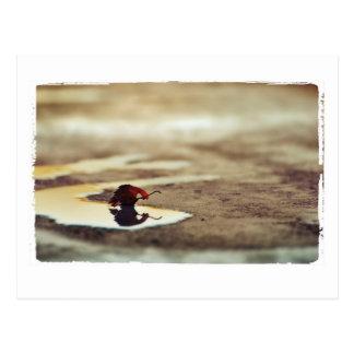aza color photography postcard