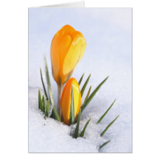 Azafrán amarilla tarjeta de felicitación