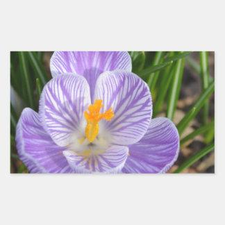 Azafrán floreciente rectangular pegatinas