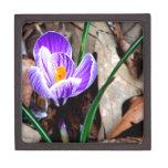Azafrán púrpura caja de joyas de calidad