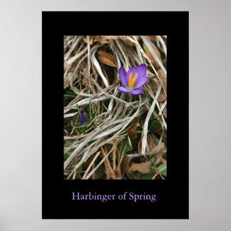 Azafrán púrpura, heraldo de la primavera póster