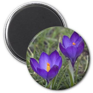 azafrán púrpura imán de frigorífico