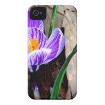 Azafrán púrpura iPhone 4 Case-Mate cárcasa