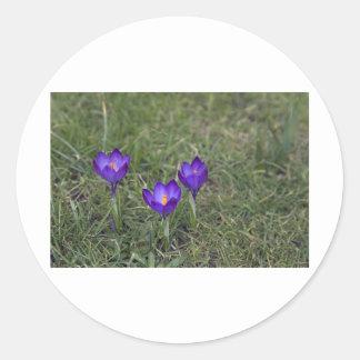 azafrán púrpura etiqueta redonda