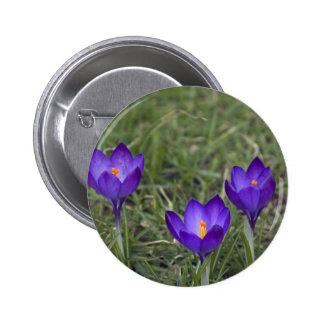 azafrán púrpura pin
